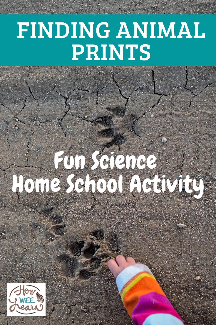 My kids love this fun science home school activity - finding animal tracks in the sand or mud and exploring what type of animal it was!